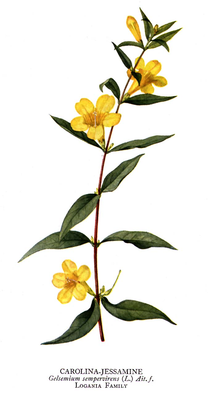 1000 Images About Carolina Sun Yellow On Pinterest Jasmine Buxton